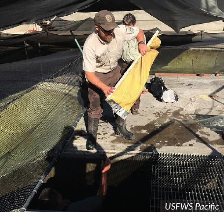 Aquaculture Hatchery Manager | Career Profile | AgCareers com
