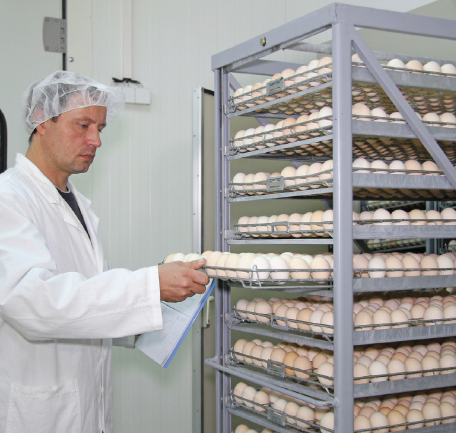 poultry hatchery manager