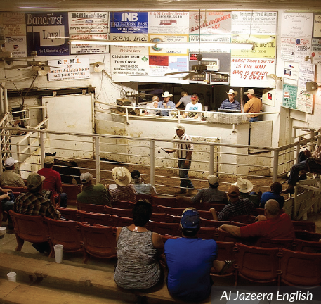 livestock auctioneer