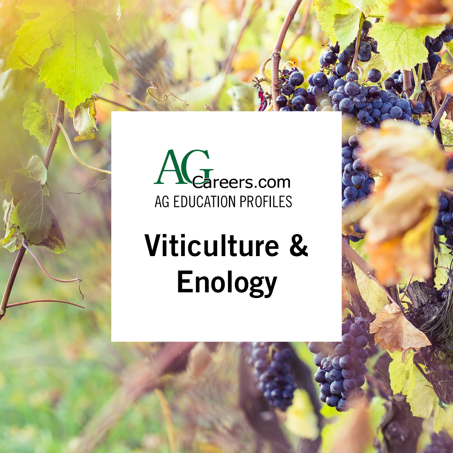 viticulture & enology
